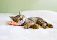 آشنایی با انواع عکس گربه برای پروفایل