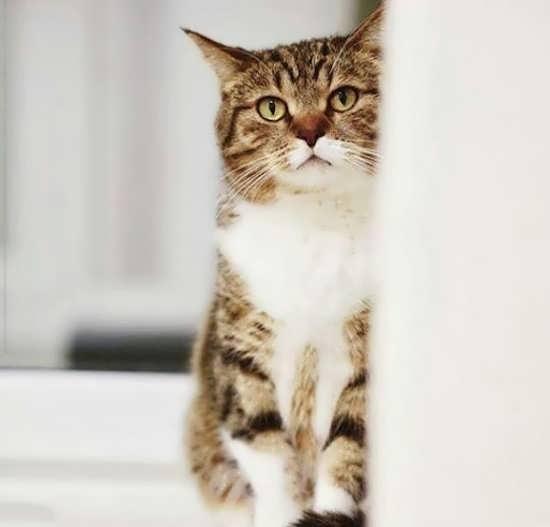 نمونه تصاویر باحال و جذاب گربه