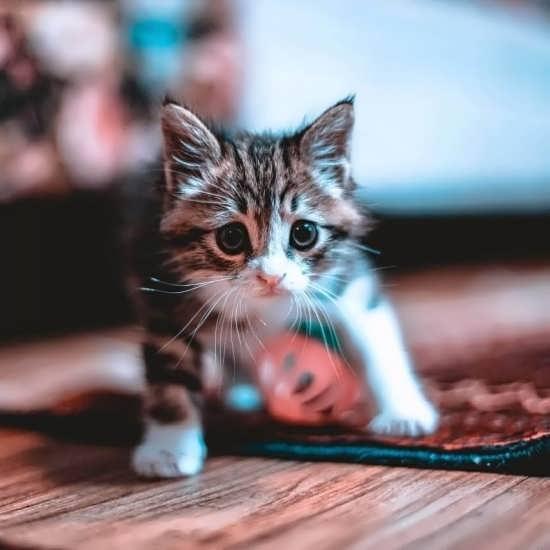 تصویر پروفایل باحال و خاص گربه