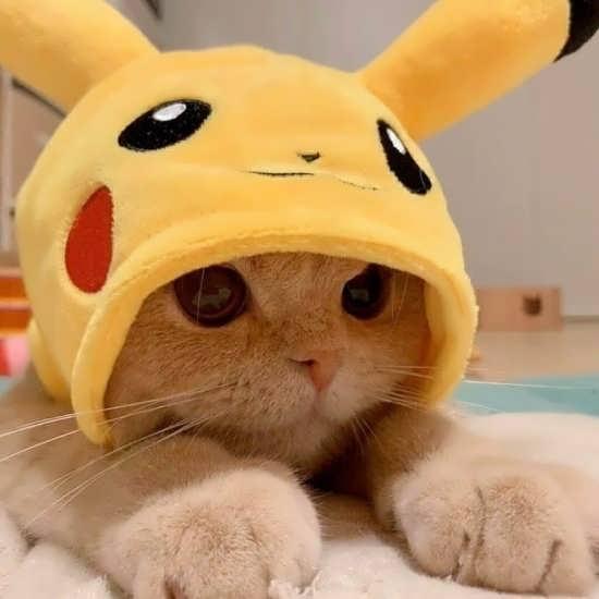 انواع متفاوت عکس گربه برای پروفایل