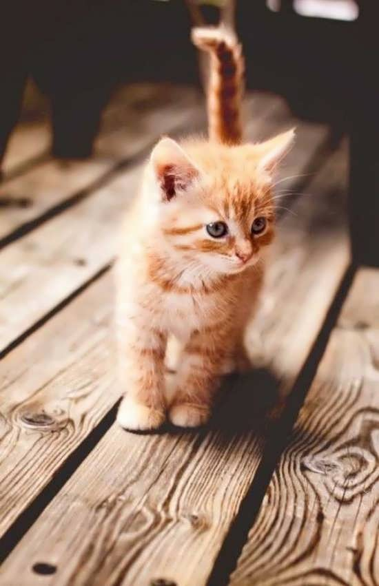تصویر دلنشین و باحال گربه ها