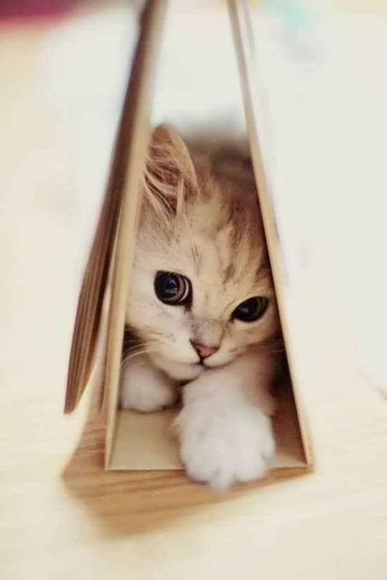 انواع دیدنی عکس گربه برای پروفایل