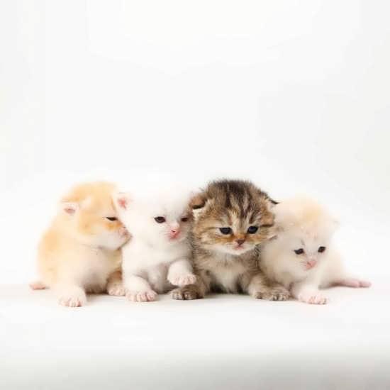 تصویر چهار بچه گربه ملوس