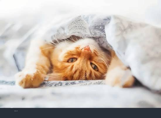 گالری عکس گربه برای پروفایل