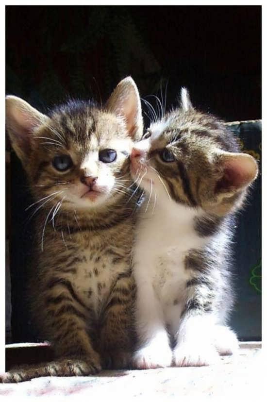 نمونه تصویر جذاب گربه برای پروفایل