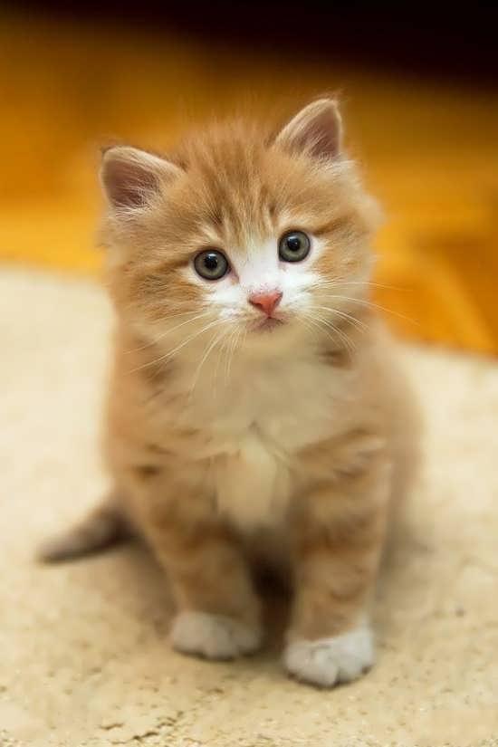 انواع تصویر پروفایل گربه