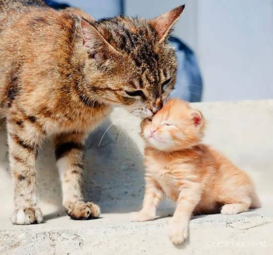 انواع زیبا عکس گربه برای پروفایل