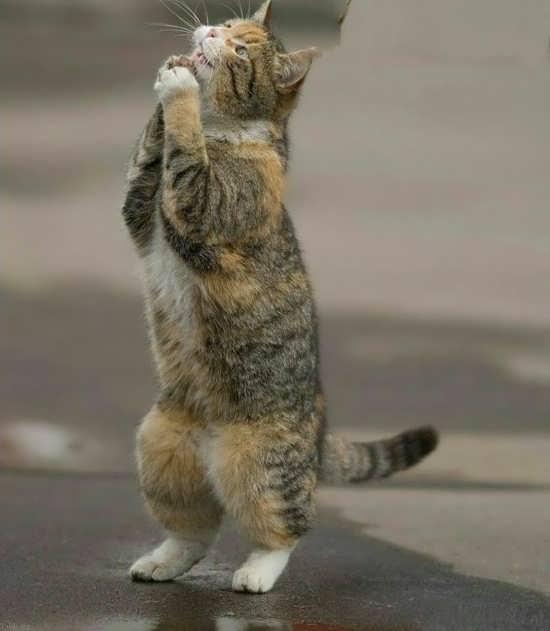 تصویر زیبا از گربه ایستاده