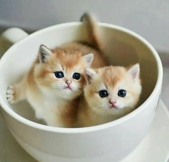 عکس گربه برای پروفایل واتساپ