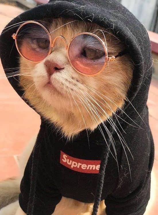مجموعه جدید عکس گربه برای پروفایل