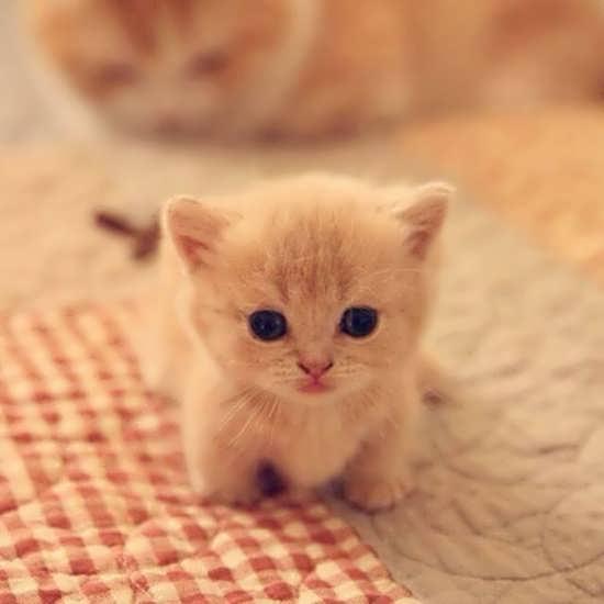 تصاویر جدید و جذاب از گربه