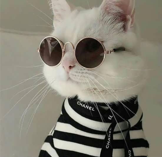 تصویر پروفایل بامزه گربه