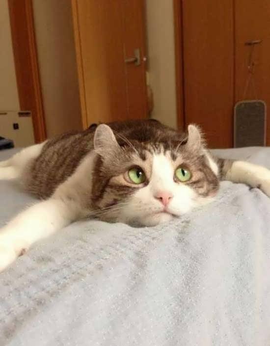 تصویر پروفایل زیبا گربه