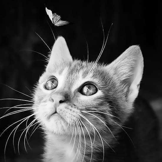 تصویر پروفایل های باحال و جذاب گربه