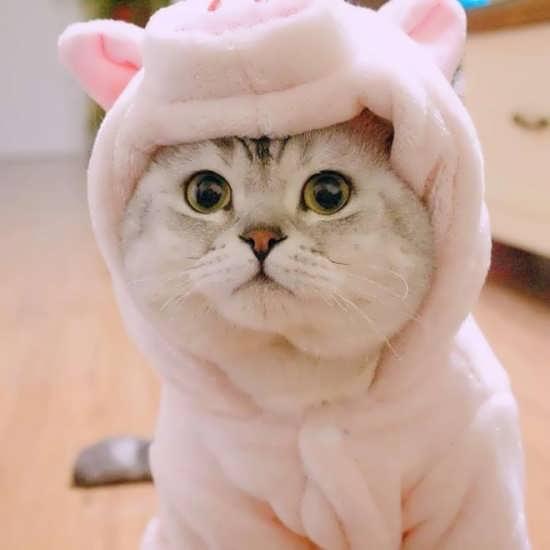انواع عکس گربه برای پروفایل