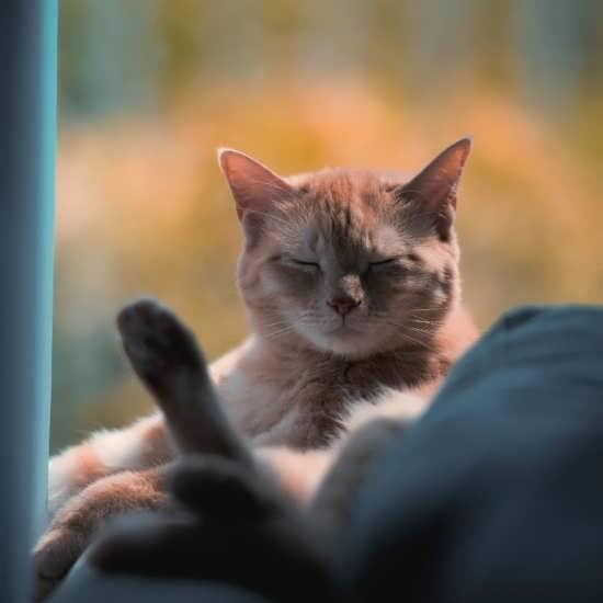 تصویر گربه با چهره ترسناک