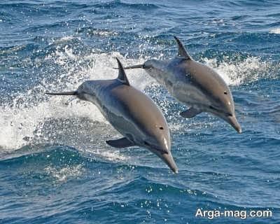 خصوصیات حیوان دلفین