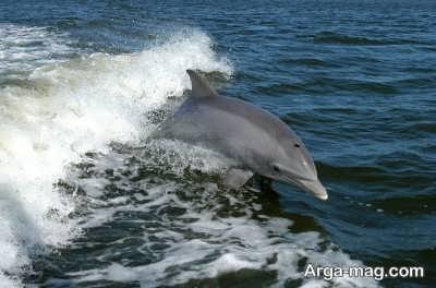 چگونگی تنفس دلفین ها