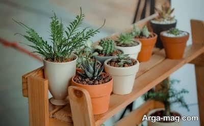 اقدامات پس از انتقال گیاهان