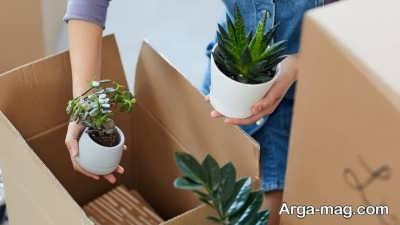 اقدامات لازم برای انتقال گل های آپارتمانی