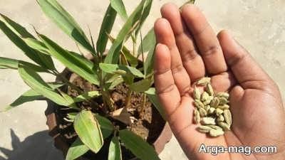 دستورالعمل پرورش بذر هل