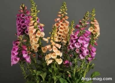 خواص متفاوت گل انگشتانه
