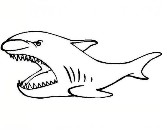 نقاشی جالب کوسه برای کودکان