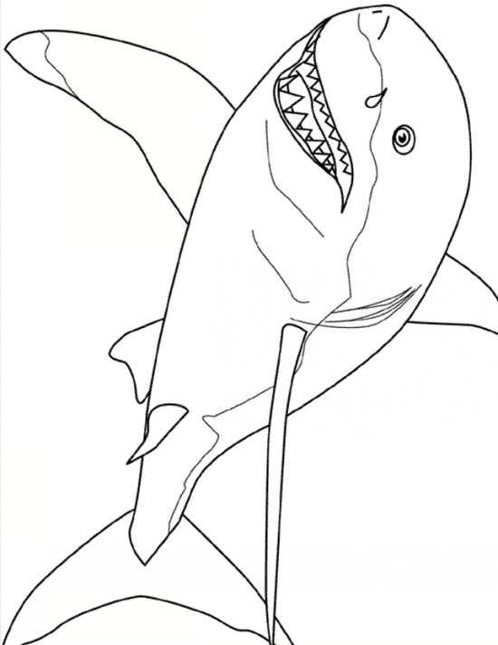 نقاشی کوسه برای بچه ها