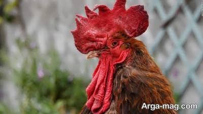 اصول آوازخوانی پرندگان