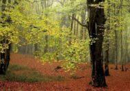 آشنایی با جنگل الیمستان