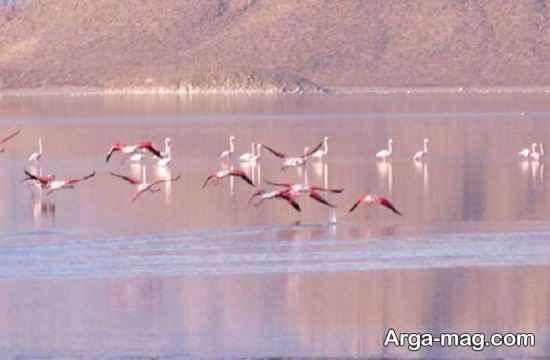 دریاچه کافتر